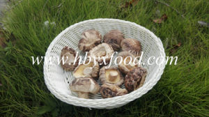 Polish Wild Dried Tea Flower Mushroom pictures & photos