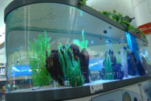 Fashionable Acrylic Oval Aquarium pictures & photos