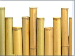 Sale Cheap Raw Dry Bamboo Poles for Various Uses pictures & photos