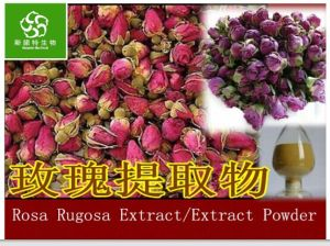 100% Natral Pure Rosa Rugosa Extract Rose Extract