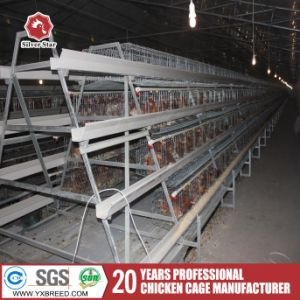Silver Star a Type of Automatic Chicken Cage pictures & photos