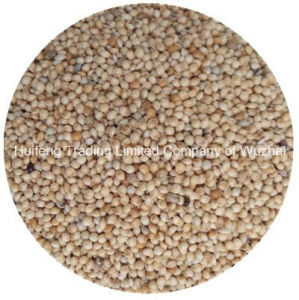 Broom Corn Millet (White)