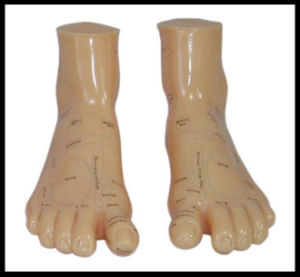 Massage Foot Model (M-9-17) Acupuncture pictures & photos