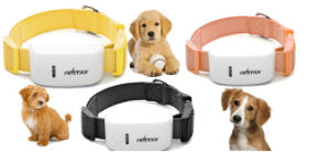 300h Standby Tk Star Tk909 The Latest in Pet & Personal Security GPS Tracker, Google Map Tracking System with Free Web Platform pictures & photos