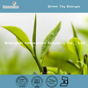 Top Quality Green Tea Extract Supplement/Green Tea Powder 1kg/Green Tea EGCG 98%
