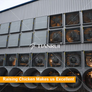 Tianrui Automatic Chicken Farm Poultry Battery Cage System/Battery Layer Poultry Cage pictures & photos