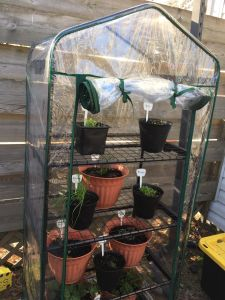 Mini Greenhouse DIY Home Greenhouse Indoor Greenhouse Garden Greenhouse Good Quality Portable Greenhouse pictures & photos