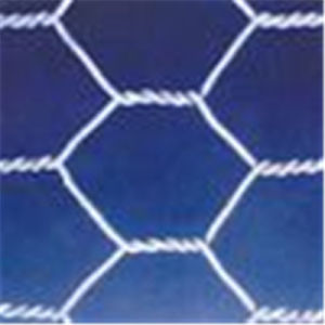 Hexagonal Wire Mesh/Plastic Mesh China Supplier pictures & photos