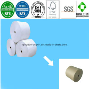 Ivory White PE Coated Paper for Food Packaging pictures & photos