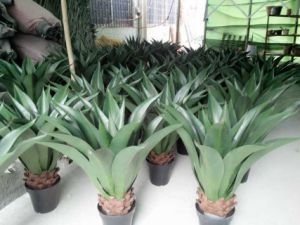 High Quality of Artificial Plants of Agave Jf12010559 pictures & photos