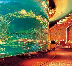 Huge Aquarium/Curved Glass Aquarium/Cylindrical Acrylic Aquarium pictures & photos