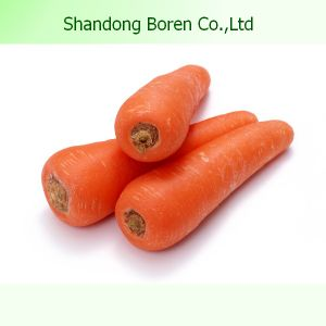 Chinese Fresh Carrot with Best Quality