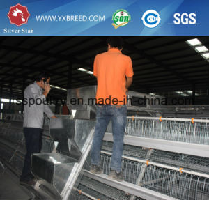 Chicken Laying Egg Cage for Africa Nigiera Poultry Farming Equipment A3l90 pictures & photos