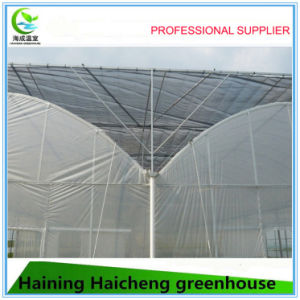 Multi Span Agriculture Plastic Film Vegetable Greenhouse pictures & photos
