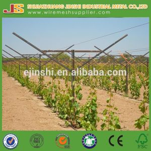 275g High Quality Grape Post for Canada Market pictures & photos