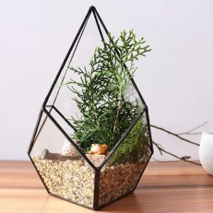 Artistic Hanging Air Plant Teardrop Diamond Glass Geometric Terrarium pictures & photos