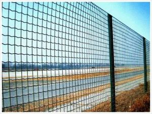 Wire Mesh Fence Eurofence Welded Mesh pictures & photos