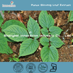 Cosmetic Field Panax Ginseng Leaf Extract with Ginsenosides