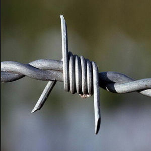Security Galvanized Barbed Wire for Fence pictures & photos