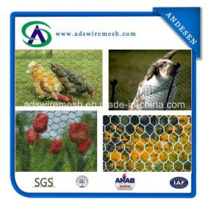 Hot Sale! ! ! 1/2′′ Hexagonal Wire Mesh Chicken Wire Mesh, Chicken Wire pictures & photos