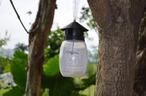 Ilot Portable Fruit Fly Trap pictures & photos