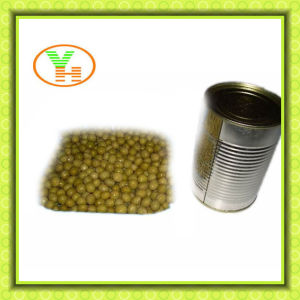 Canned Green Peas in Dubai Just From Green Peas in Peas pictures & photos