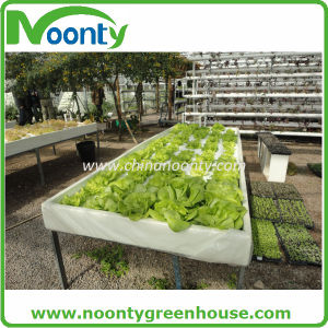 Farm Dft Hydroponics System for Vegetable Growing pictures & photos
