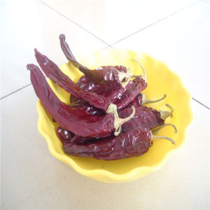 High Quality Paprika Pods pictures & photos