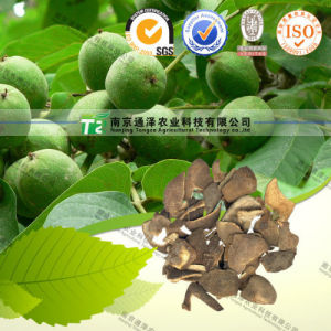 Manufacturer Production Pure Herb Dried Immature Orange Peel pictures & photos