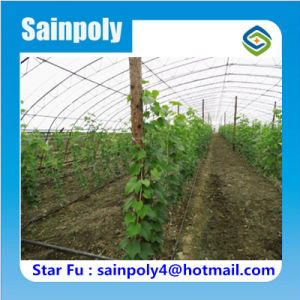 High Quality Poly Tunnel Greenhouse for Grape pictures & photos