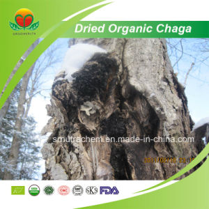 Manufacturer Supply Dried Organic Chaga pictures & photos