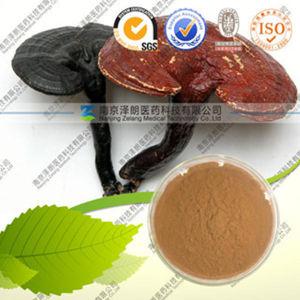 High Quality Ganoderma Lucidum Extract Ganoderma Lucidum Polysaccharide pictures & photos