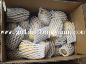 Fresh Wholesale Potato pictures & photos
