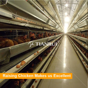 Chicken battery cage in sandwich steel structure chicken farm building pictures & photos