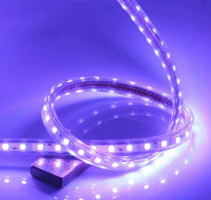 Ce EMC LVD RoHS Multi Color 220V LED Rope Light pictures & photos