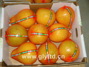 Fresh Honey Pomelo New Crop pictures & photos