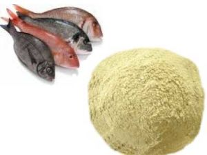 Sythetic/Pure Fish Meal for Feed