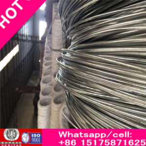 Rich Electro Galvanized Iron Wire&Galvaized Binding Wire pictures & photos