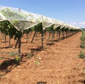 Fruit Tree Anti Hail Net From Anping Factory pictures & photos