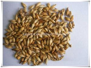 Natural Malt/ Fructus Hordei Germinatus Extract Powder pictures & photos