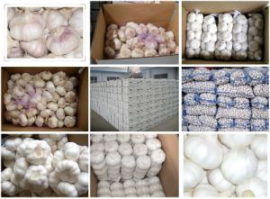 High Quality Export Pure White Garlic (5.0cm and up) pictures & photos