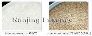 Highly Effective Tribenuron-Methyl pictures & photos