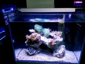 Cheap Chinese LED Aquarium Light for Coral Reef Blue/White pictures & photos