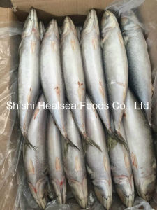 Big Size Land Frozen Pacific Mackerel pictures & photos