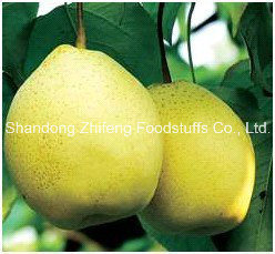 New Crop Fruit Fresh Ya Pear pictures & photos