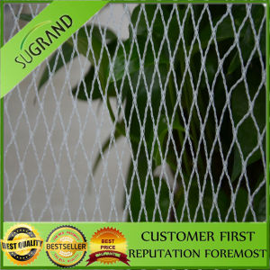 Good Price and Fruit High Quality Pest Netting pictures & photos