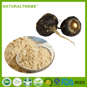 Natural Herbs 30: 1 Black Maca Root Extract pictures & photos