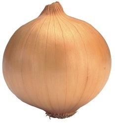 Onions pictures & photos