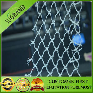 7GSM Green Bird Protection Net to Spain pictures & photos