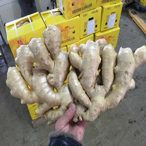 2016 Ginger Roots Seeds /Dried Ginger Price /Ginger Buyer pictures & photos
